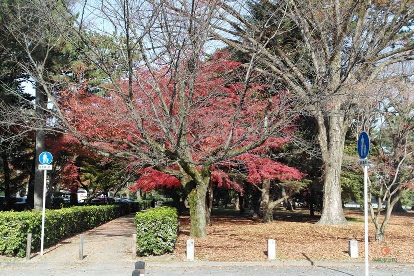 Parque del Palacio Imperial de Kioto desde el bus.